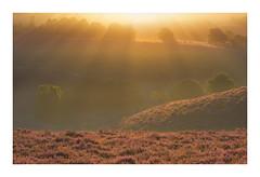 Zonnestralen over de Posbank (jos.pannekoek) Tags: posbank veluwe nederland netherlands nikon 70200f4 d500 landschap landscape sunrise zonsopkomst