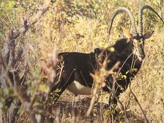 Namibia Dangerous Game Safari - Caprivi Strip 43