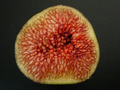 fig slice close-up (atgc_01) Tags: lumix lx3 fig closeup