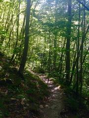 iph503 (gzammarchi) Tags: italia paesaggio natura montagna firenzuolafi vallerovigo riorovigo bosco strada sentiero