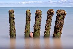 Porlock Groynes 06 (Photograferry) Tags: exmoor nationalpark uk southwest england outside nopeople landscape nature 2016 porlock beach coast ocean longexposure groynes weathered wooden posts sea smooth