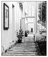 The walled kitchen garden, Clumber Park (A.I.D.A.N.) Tags: walledkitchengarden kitchengarden garden wall clumberpark blackandwhite blackwhite monochrome fuji fujix100 fujifilm fujixseries x100 path windows lines diagonals geometry border photoborder whiteborder door doors doorway plants pots plant pot plantpot walls gardens notts nottingham nottinghamshire nationaltrust worksop nationaltrustproperties paths