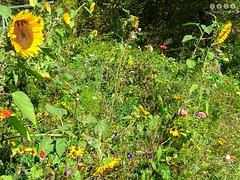Herbst am Biosphren-Infozentrum Lauterach - Autumn at Biosphere Infocentre Lauterach (warata) Tags: 2016 deutschland germany sddeutschland southerngermanybadenwrttembergschwaben swabia schwbischealb schwabenalb mittelgebirge fluss river riverlandscape riverscape lauter grosselauter