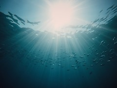 Sunlight diving (akarakoc) Tags: bodrum agean ageansea underwater sunbeam light hero4 gopro blue fish snorkeling sea turkey