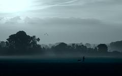 Dunst am Morgen (pixel-sallo) Tags: lindenberg landschaft outdoor natur feld morning morgen dunst haze mist fog tree baum bume sunrise sonnenaufgang stimmung mood himmel sky field dog hund dogwalker einfarbig monochrome