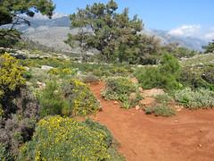 Near Sougia, Crete, Greece (east med wanderer) Tags: walking track kreta greece crete footpath e4 kriti sougia  lissos