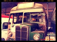 London transport Greenline coach 9T9  T448. Cobham bus museum 31/10/10 (Ledlon89) Tags: bus london buses coach transport greenline regal lt londonbus aec cobhambusmuseum alltypesoftransport