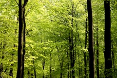 Forest in spring (TobiasMaRot) Tags: wood trees light brown tree green beautiful forest licht leaf spring hell may sunny mai noon grn braun deciduous blatt leafs holz sonnig wald bltter bume baum frhling mittags laubbaum laubbume