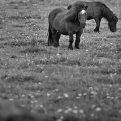 Horses (Joerg Marx) Tags: horse animal pferd tier highqualityanimals