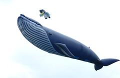 The Wirral Kite Festival (Puerto De Liverpool.) Tags: june liverpool kites owl kiteflying wirral newbrighton merseyside spermwhale annualfestival giantkites thewirral owlkite hugekites whalekite thewirralpeninsula thewirralkitefestival