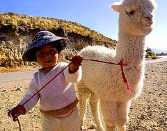 Local kid with her baby alpaca, Inca Trail Trip, Peru (Mandala Travel) Tags: travelling alpaca peru kid child llama andes incatrail peruvian matka lapsi alpakka andit vaellusmatka mandalatravel inkapolku