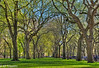 Central Park : Elm Trees (KP Tripathi (kps-photo.com)) Tags: newyorkcity trees newyork beautiful bright path centralpark manhattan sunny 美国 elmtrees 时代广场 紐約 タイムズスクエア canoneosmarkiii newyorkcityandmanhattan 美国加州 ニューヨークシティ 뉴욕시 thànhphốnewyork न्यूयॉर्कशहर 타임스광장 泰晤士廣場 مدينةنيويورك นิวยอร์กซิตี้ kptripathi canoneos24105f4lis