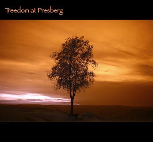 2012 05 23 Treedom at Presberg
