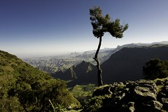 Genevrier on Simien mountains. Ethiopia (courregesg) Tags: africa mountains tree nature landscape ethiopia paysage arbre afrique simien the4elements