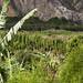 La rigogliosa vegetazione tropicale della Valle de Chota