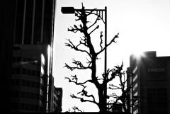 potential storylines (MdKiStLeR) Tags: street light urban bw silhouette japan contrast photography tokyo asia shibuya socialcommentary manvsnature 2012 urbanx mdkistler readthetagsdamnit eneosisajapanesegasandoilcompany
