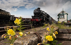 Black 5 (alanrharris53) Tags: flower weed railway quorn greatcentral gcr black5 45305