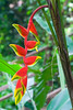 red flower (steve happ) Tags: flower laos tadlo salavan