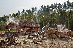 Gur Making in Chhutmalpur (Anoop Negi) Tags: cane rural photography photo juice sugar crushing activity making anoop dehradun pradesh unit negi uttar gur jaggery uttarakhand ezee123 agriculutural chhutmalpur