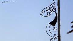 Poisson : Symbole de Bizerte (dominiquekt) Tags: mer club de photo kodak yacht tunisia amal ciel cap dominique angela plage dauphin blanc phare khaled bizerte barque pche rass navire paquebot bizerta touel z981 rassenjla mezzalouna