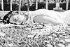 Verdiana Raw-2 (Jacopo Pandolfini) Tags: light blackandwhite bw italy music garden dead italia darkness guitar percussion gothic suicide goth piano voice bn tuscany ethereal musica daisy dreamy toscana luce biancoenero morto neoclassical boboli chitarra giardino esoteric omicide gotico suicidio neofolk romanticism voce oscurità belcanto romanticismo omicidio esoterico percussioni etereo modernclassical blackwhitephotos neoclassico neoromantic sognante metaxy neoromanticismo verdianaraw weprofessionalsadpeople metaxý