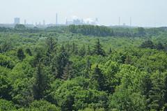 Industry (-Kj.) Tags: dunearea naturalreserve northholland castricum coast dunes hike summer forest trees chimney smoke vapour