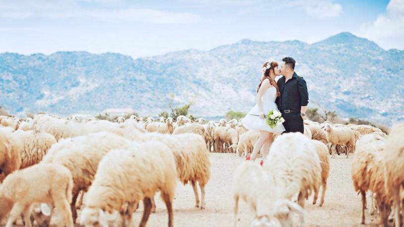 Đồng cừu suối Nghệ 1