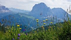 Gruppo del Sella (Franco Vannini) Tags: dolomiti dolomites odles sassrigais fermeda seceda valgardena valdifunes odle sassolungo