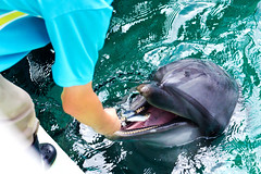 Dolphin of Shinagawa Aquarium :  (Dakiny) Tags: japan tokyo shinagawa shinagawaku katsushima outdoor city street park shinagawakuminpark aquarium shinagawaaquarium people creature animal mammal seacreature dolphin bottlenosedolphin nikon d5100 nikkor 50mm f18 afsnikkor50mmf18g nikonafsnikkor50mmf18g nikonclubit