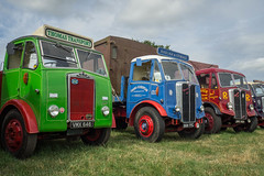 Colourful classics at Welland (Ben Matthews1992) Tags: welland 2016 steam rally classic commercial lorry truck wagon waggon vehicle transport haulage old vintage historic preserved preservation jny484 aec mammoth major twinsteer chinesesix chinese6 1949 rosser 689yyc 1952 transeuropean trans european services vmx646 albion chieftain flatbed flat 1950 thomastransport