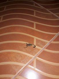 20160831-Scorpion_1