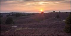 Sunset Veluwe, Netherlands (CvK Photography) Tags: canon color europe gelderland nationalpark nature netherlands summer sunset veluwe rheden nederland nl posbank cvk chrisvankan ngc theroom cvkphotography