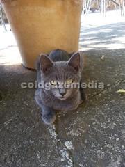 20151106_113640 (coldgazemedia) Tags: photobank stockphoto cat animal mallocra majorca spain espaa spainishisland balearicislands campanet