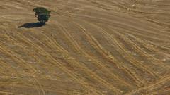 Harvested field (hbothmann) Tags: provinciasiena tuscany toscana toskana    valedeorcia orciatal valdorcia