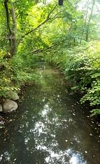 Swampy (SurFeRGiRL30) Tags: creek brook river vansuanpark zoo green paramus nj newjersey paramusnj summer nature water yucky swamp