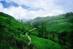 @ Munnar, Kerala, India (Suresh Photography) Tags: munnar kerala nature mountain tea garden green fog mist clouds trees sky nikon suresh chennai tamilnadu india sureshcprog sureshphotography d5300 landscape outdoor