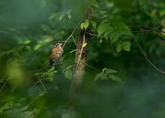 Spotlight03-23a (sknight56) Tags: bird sunshine minnesota bloomington canon greatphotographers beyondbokeh
