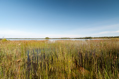 Mertaugh addition to the Birge Nature Preserve (Odalaigh) Tags: lake huron hessel michigan water reeds rocks shoreline unspoiled natural