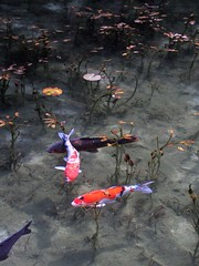 """Monet (Monet) """"Water Lilies"""" (gotto510) Tags: monet waterlilies french painter claude"""