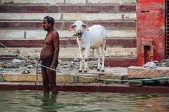(Mathijs Buijs) Tags: morning man bathing goat walking leash water ganges ganga varanasi uttar pradesh northern india asia canon eos 7d