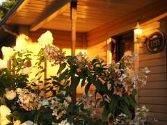 1755..... (Lise1011) Tags: galerie olympusomd olympus lumire luminosit ngc coucherdusoleil sunset fleur flower