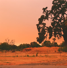 Wildfire fence (THHintze) Tags: mamiya mamiya6 e100vs rangefinder 120 wildfire california