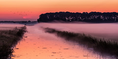 A blanket of fog (PhotoSolutions | pure photography) Tags: netherlands sunset d800 waterway water goodmorning weather pastel colorful ditch pink foggy mist colors fog nohdr birds nikon light