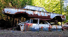McLean's_0046 (janetliz) Tags: old cars rusty scrapyard decayed tpmg autowreckers mcleans