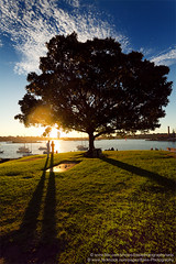 Elkington Park, Balmain, Sydney, NSW, Australia (Bass Photography) Tags: park sunset tree shadows sydney nsw newsouthwales balmain sydneyharbour leichhardt dawnfraserbaths elkingtonpark
