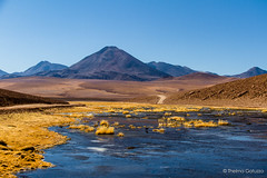 Atacama (Thelma Gatuzzo) Tags: chile lake mountains americalatina southamerica nature grass landscape ngc npc atacama viagem 2011 antofogasta bestofblinkwinners photocontesttnc12 ©thelmagatuzzo blinksuperstars