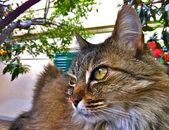 The Boss (Master Mason) Tags: boss cat chat gatto