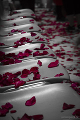"""Red Roses • <a style=""""font-size:0.8em;"""" href=""""http://www.flickr.com/photos/89679026@N00/7282001280/"""" target=""""_blank"""">View on Flickr</a>"""