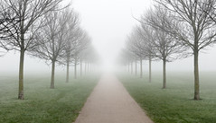 Avenue in the Mist (welshio) Tags: park trees winter mist field lines misty fog still quiet sad path foreboding infinity perspective entrance peaceful repetition gateway mysterious convergence forever avenue parallel shrubs tranquil repeat endless roadtonowhere wintry mirky treesinthemist