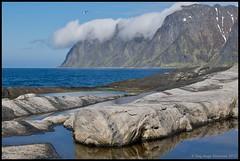 Tungeneset (Stenersenfoto) Tags: sea summer snow reflection bird nature berg norway clouds nikon seagull senja thebull oksen tungeneset